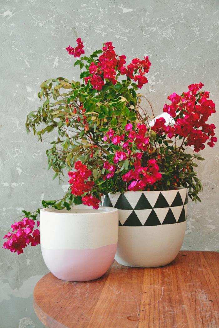 topfpflanzen frühling pflege umpflanzen rote blüten