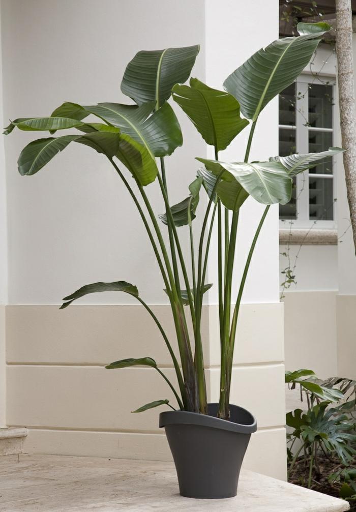 topfpflanzen und die notwendige fr hlingspflege