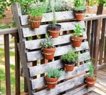 Ber 1000 balkonpflanzen gartenpflanzen zimmerpflanzen - Topfpflanzen garten ...