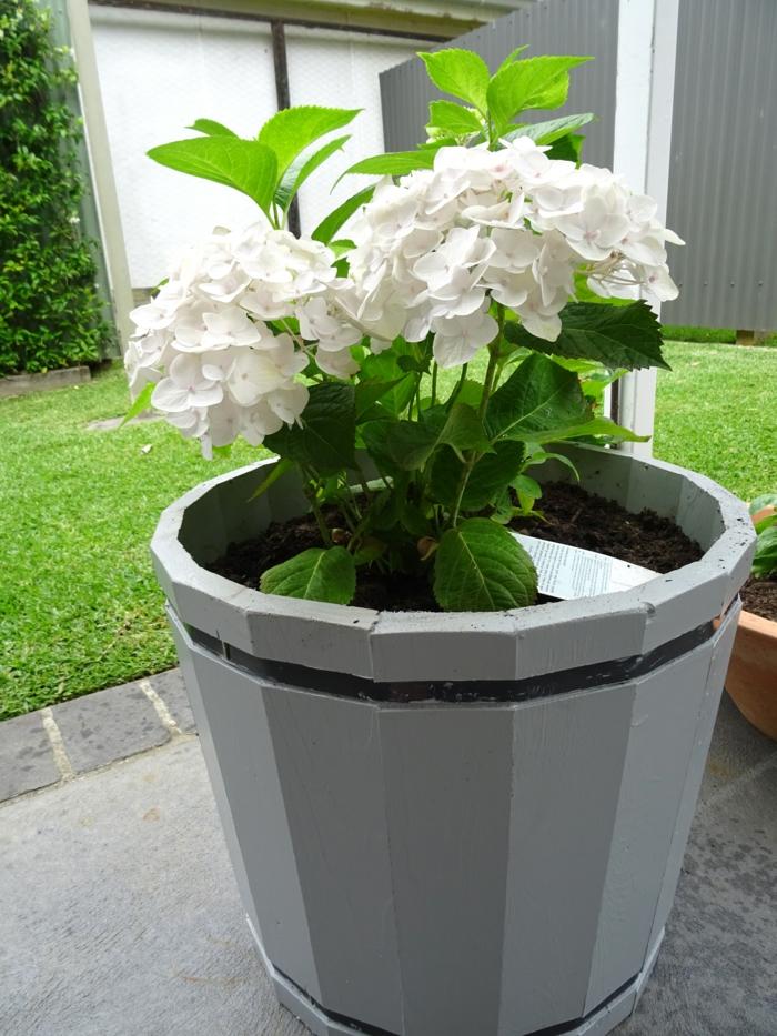 topfpflanzen hortensie gartendeko ideen pflanzen