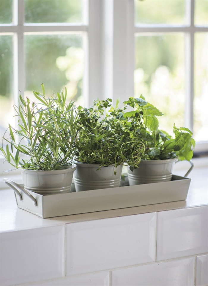 topfpflanzen innenbereich dekorieren fensterbank deko