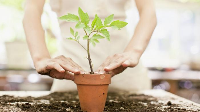 Einige Regeln Die Man Beim Umpflanzen Beachten Muss ? Bitmoon.info Einige Regeln Die Man Beim Umpflanzen Beachten Muss