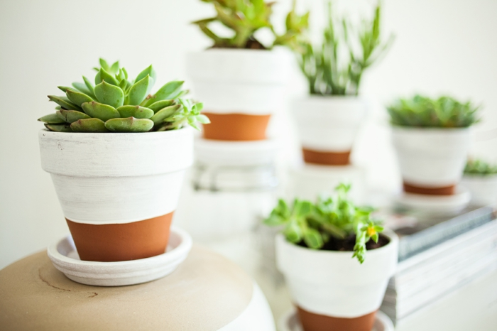 topfpflanzen sukkulenten blumentopf dekorieren