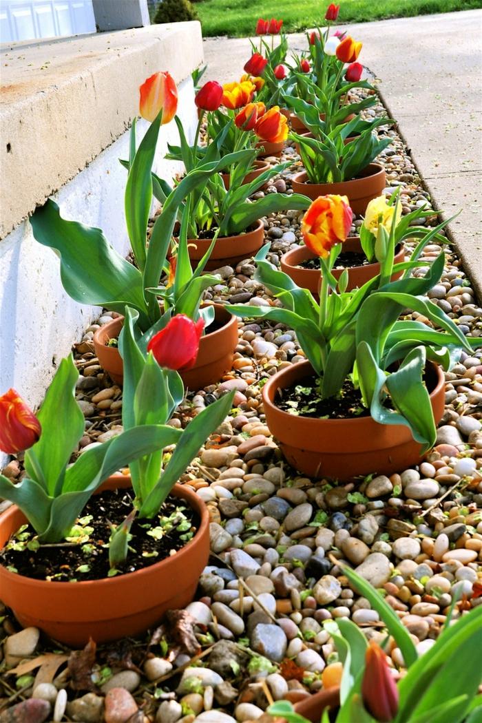 topfpflanzen tulpen gartengestaltung ideen gartendeko