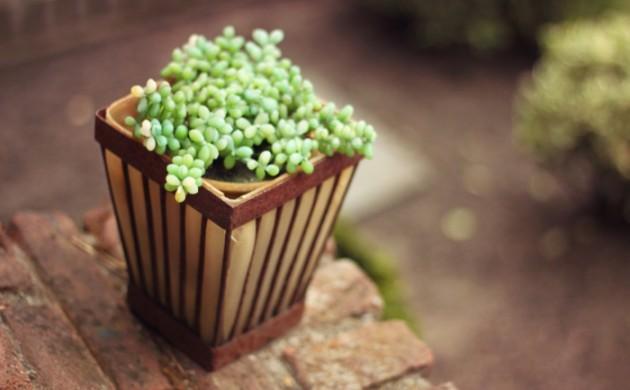 topfpflanzen-umpflanzen-frühling-garten-dekorieren