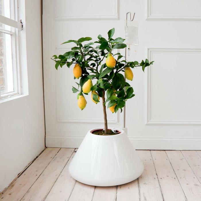 topfpflanzen weißer blumentopf elegant minimalistisch holzboden