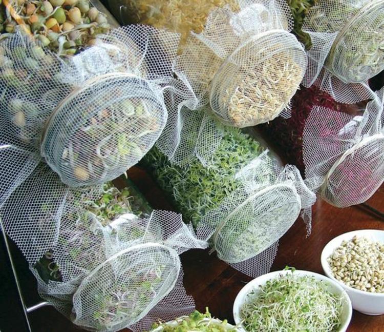 verschiedene Arten von Sprossen gesunde Ernährung Tipps