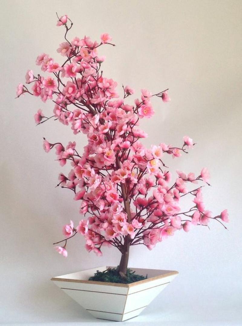 Bonsai Baum kaufen und pflegen Bonsai Cerejeira Rosa
