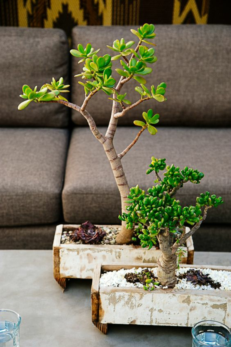 Bonsai Baum kaufen und richtig pflegen Bonsai Arten