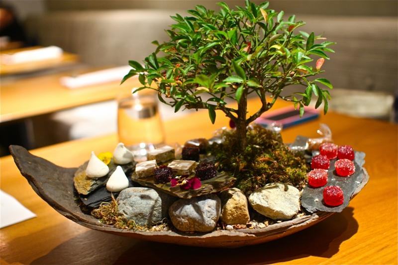 Bonsai Pflege Bonsai schneiden Feng Shui Zimmerpflanzen