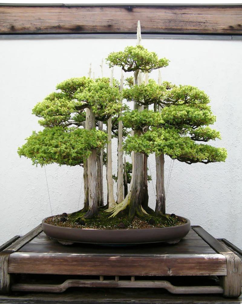 Bonsai kaufen und pflegen Bonsai Arten Mini Wald
