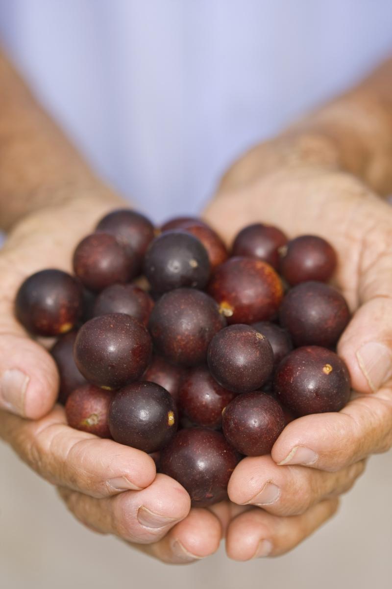 Camu Camu Myrciaria dubia Super Frucht Hand voll