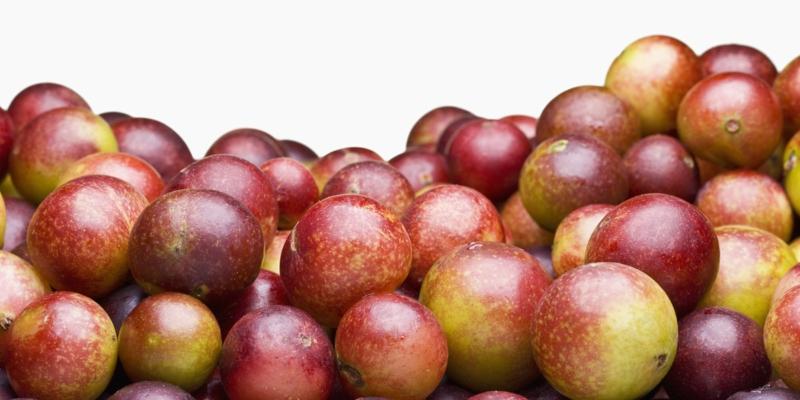 Camu Camu Myrciaria dubia kleine Super Frucht gesundes Leben