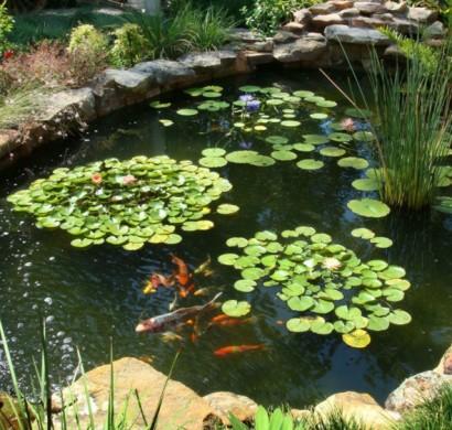 73 Gartenteich Bilder Lassen Sie Von Einem Prächtigen Garten Träumen