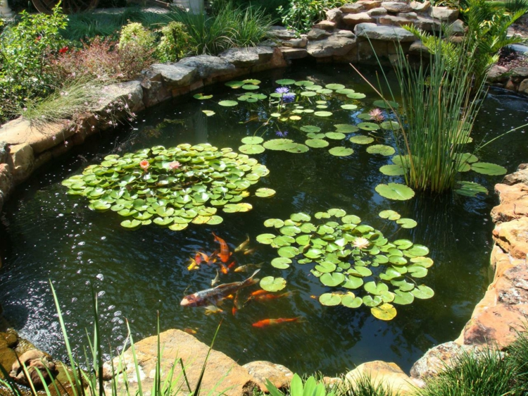 Fischteich Gartenteich Bilder Gartenideen Wasserpflanzen Teich