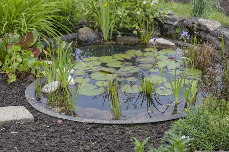 Gartenteich Bilder Gartenideen Wasserpflanzen Garten und Landschaft