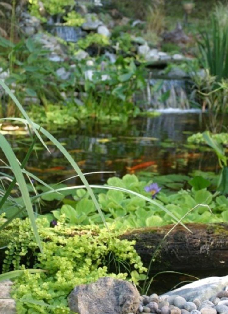 Gartenteich Bilder Gartenideen mit Steinen und Wasserpflanzen Teich