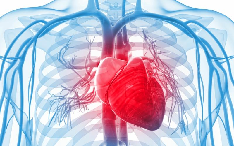 Herzanfall vorbeugen Tipps für gesunndes Leben