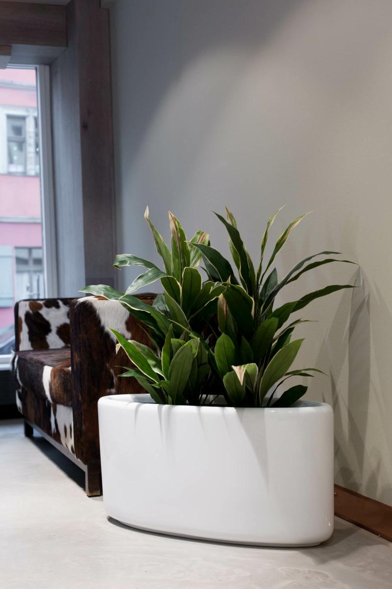 Pflanzkübel Fiberglas weiß oval Zimmerpflanzen Wartezimmer