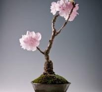 Bonsai Baum kaufen und richtig pflegen – einige wertvolle Tipps