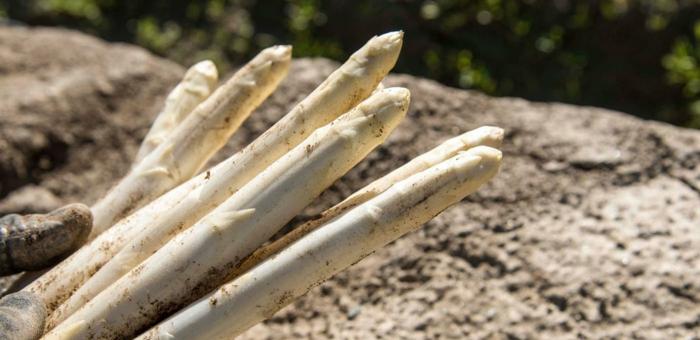 Spargelrezepte Spargel kochen Spargel gesund ausgebudelt