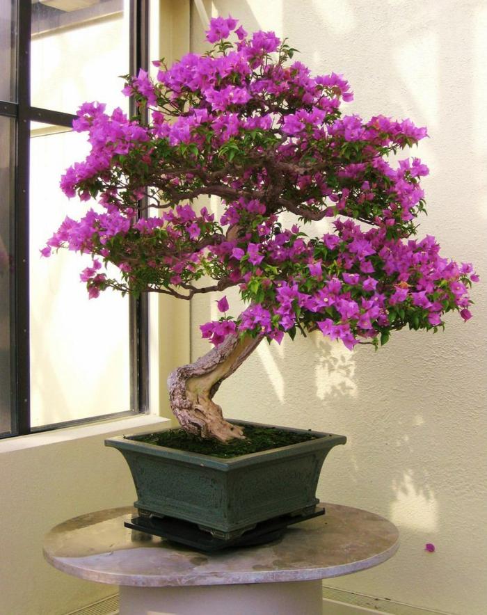 bonsai baum mini baum lila blüten exotisch