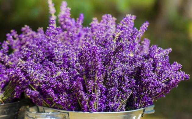 Garten und landschaftsbau gartengestaltung und for Gartengestaltung lavendel