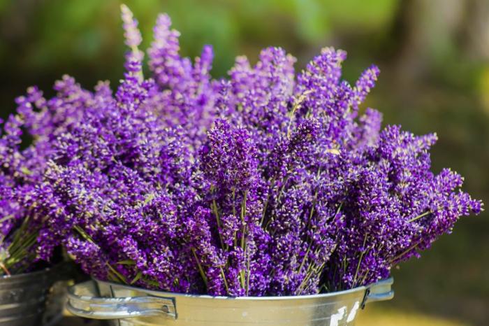 gartengestaltung ideen lavendel gartenideen gartenpflanzen