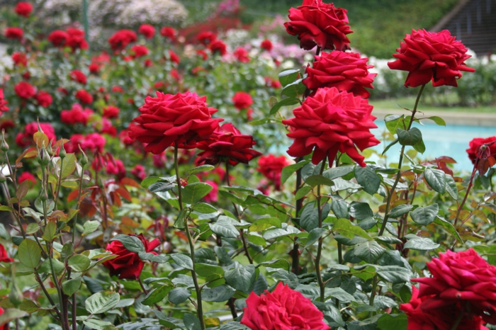 Wie Gestalte Ich Meinen Garten Im Italienischen Stil? Ideen Gartengestaltung Italienischer Stil
