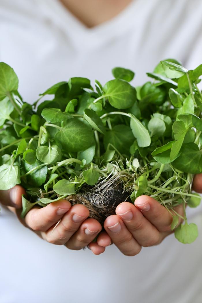 gesundes essen gute laune kräuter gesundheit