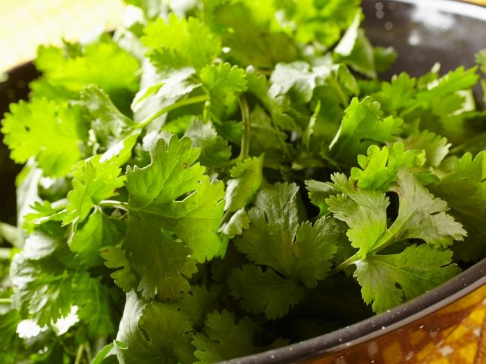 gewürze liste koriander einpflanzen gartenideen gewürze