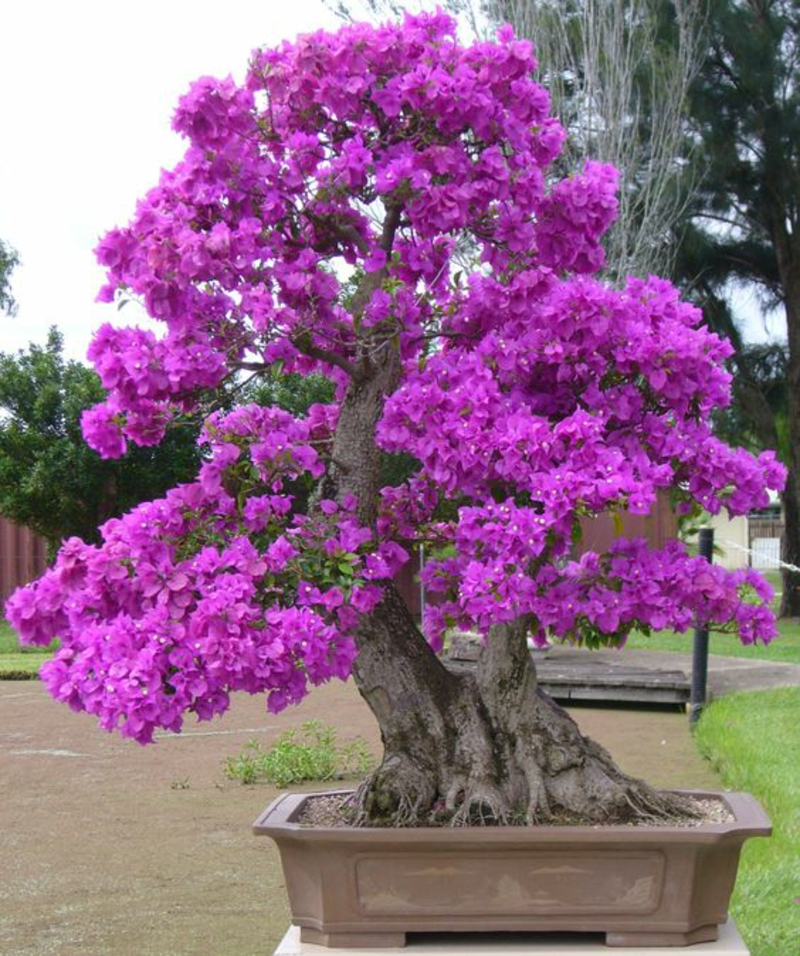 großer Bonsai Baum im Garten richtige Pflege Bonsai Arten