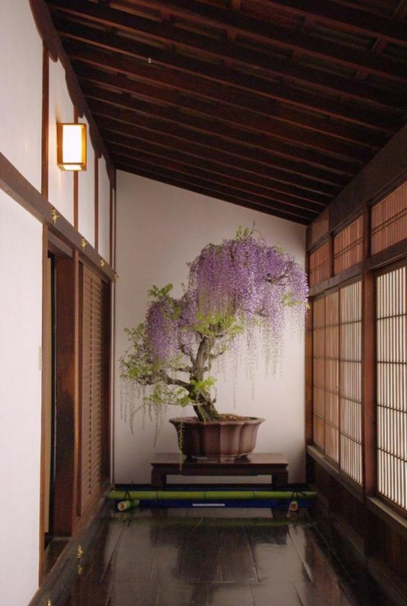 großer Bonsai Baum richtige Pflege Bonsai Arten Zen Buddhismus