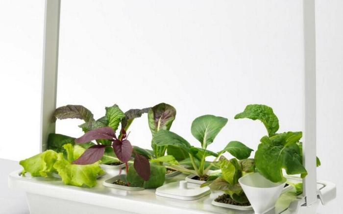 ikea garten indoor salat betrachtung salate