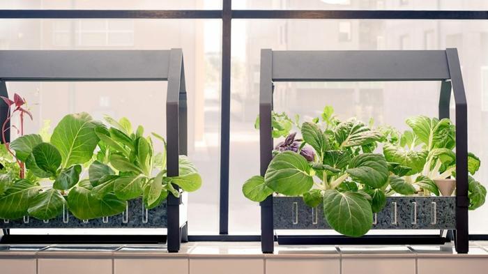 ikea garten indoor salat vorbereitung betrachtung stecklinge doppelt