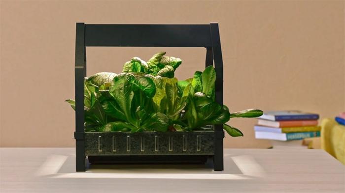 ikea garten indoor salat