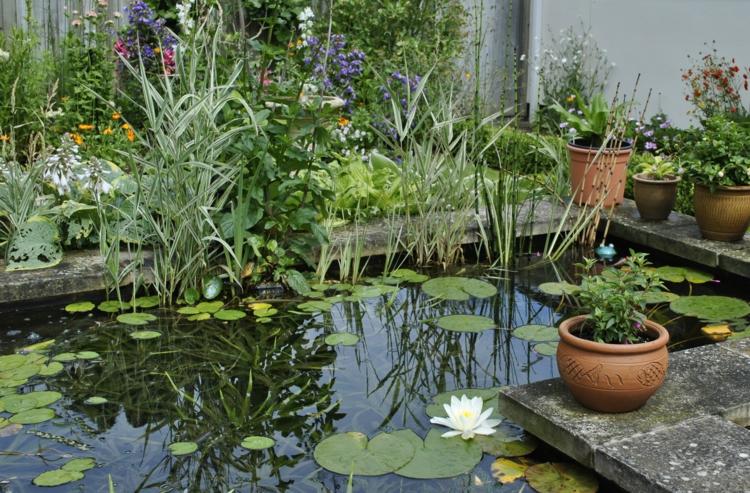 inspirierende Gartenteich Bilder Wasserpflanzen Teich