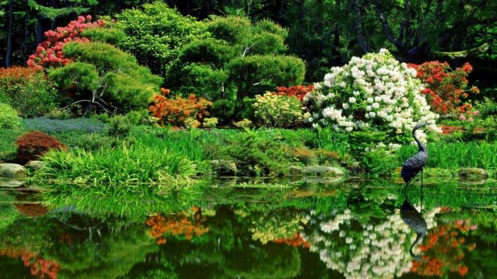 japanischer garten parkt eich grüne vegetation fernöstlich rhododendronen
