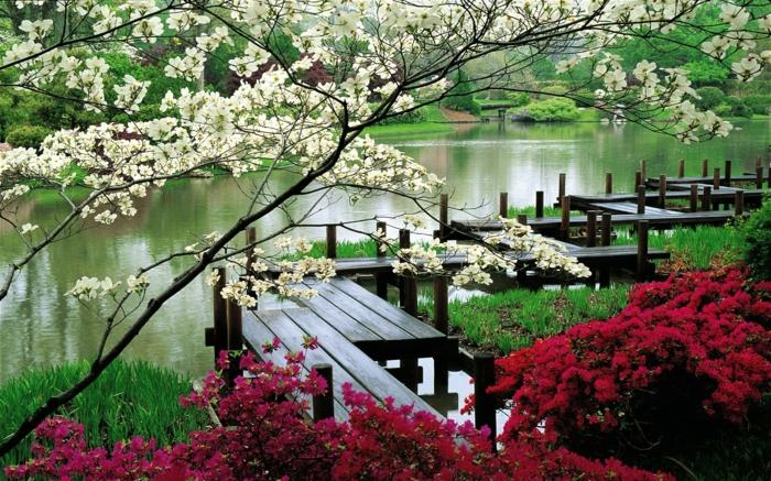 japanischer garten see park blühende bäume sträucher