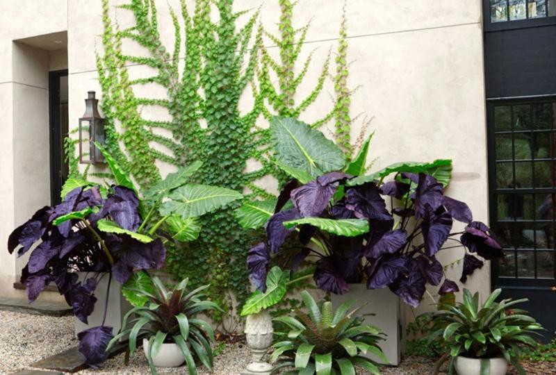 kreative Gartenideen Gartenpflanzen Efeu Wand Kübelpflanzen
