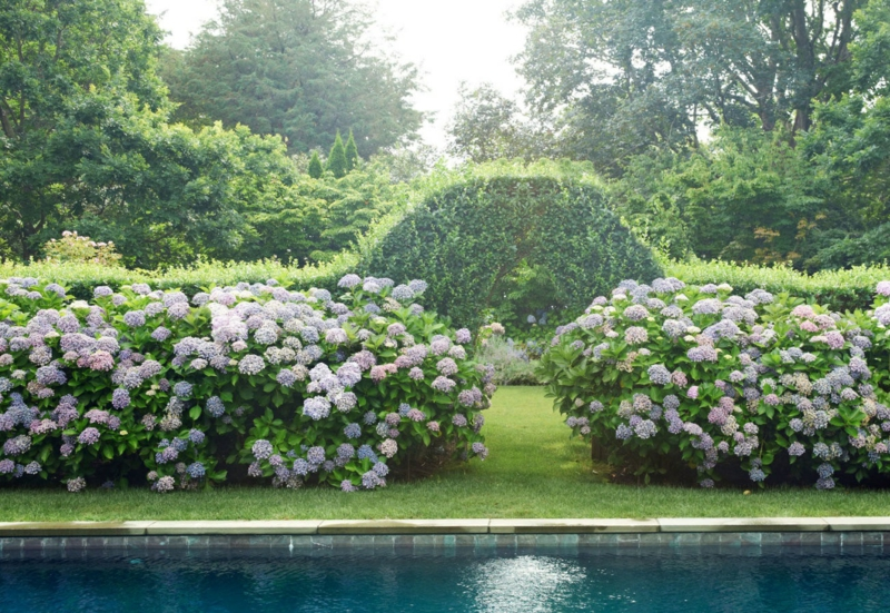 kreative Gartenideen Haus mit Gartenpool blühende Gartenpflanzen