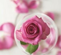 Naturkosmetik- 4 gute Argumente für das Rosenwasser