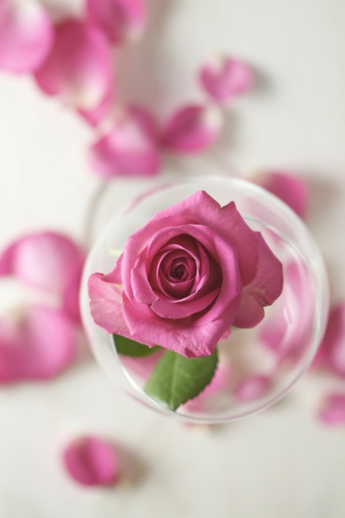 naturkosmetik rosenwasser DM duft rosenblüte