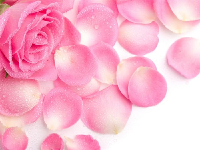naturkosmetik rosenwasser DM duft rosenblüten rosenblätter2