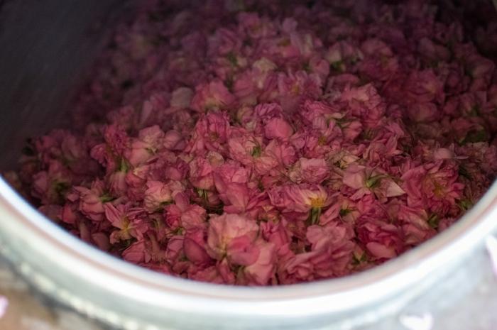naturkosmetik rosenwasser DM rosenblüten wasser blüten