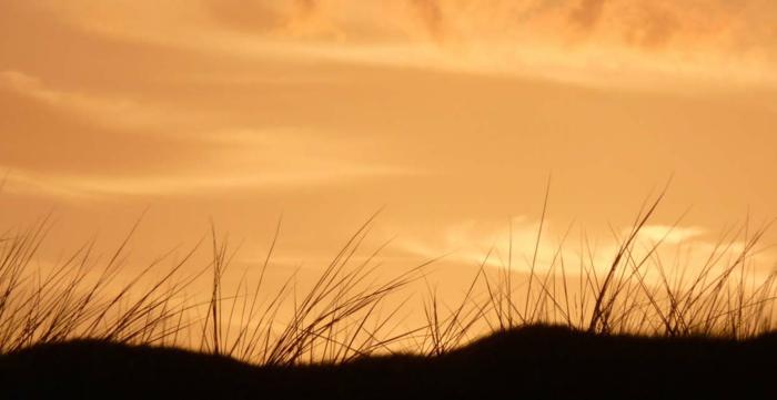 nordeney nordesee ostfriesische insel weiße düne strandpflanzen