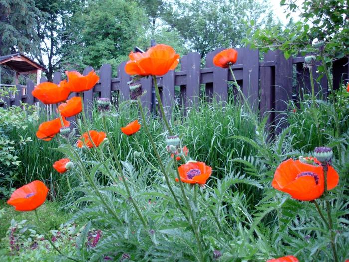 Wie Gestalte Ich Meinen Garten ? Performal.info Ideen Gartengestaltung Italienischer Stil