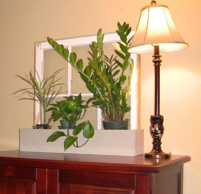 wohnideen topfpflnazen dekoideen pflanzen