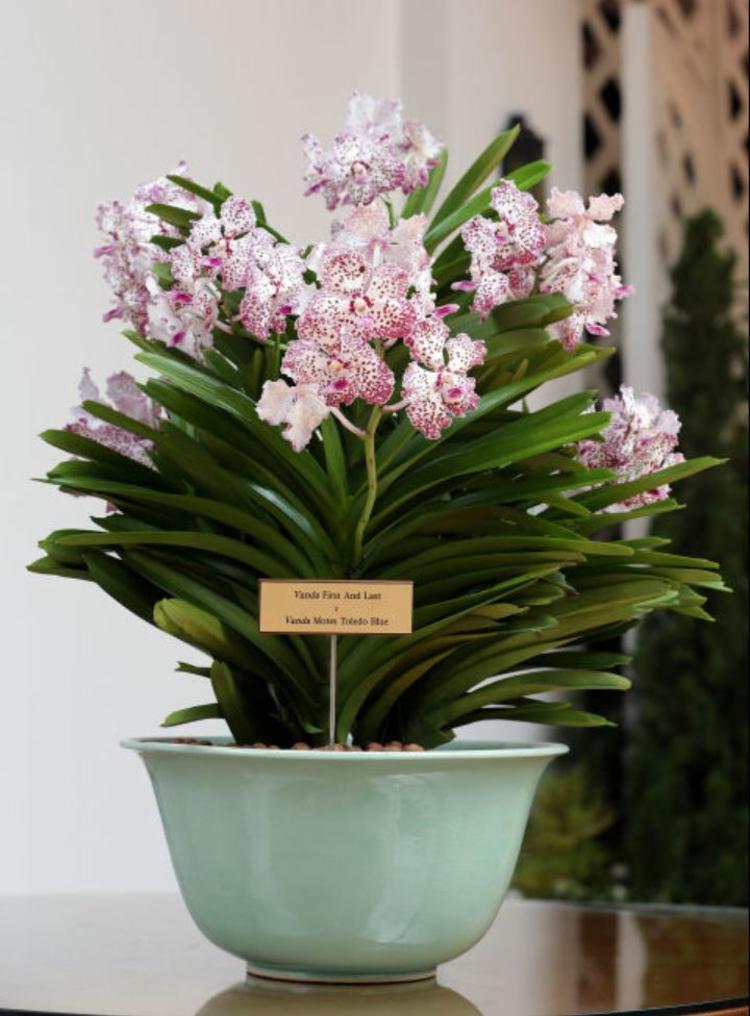 Botanische Namen William Catherine Vanda