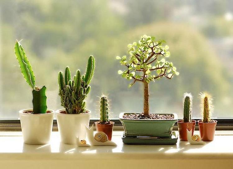 Fensterdeko Ideen Küche Zimmerpflanzen Kakteen grüne Küchenideen